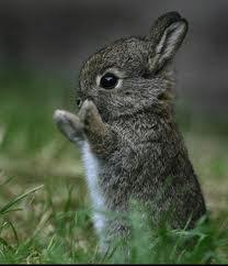 cara merawat anak kelinci