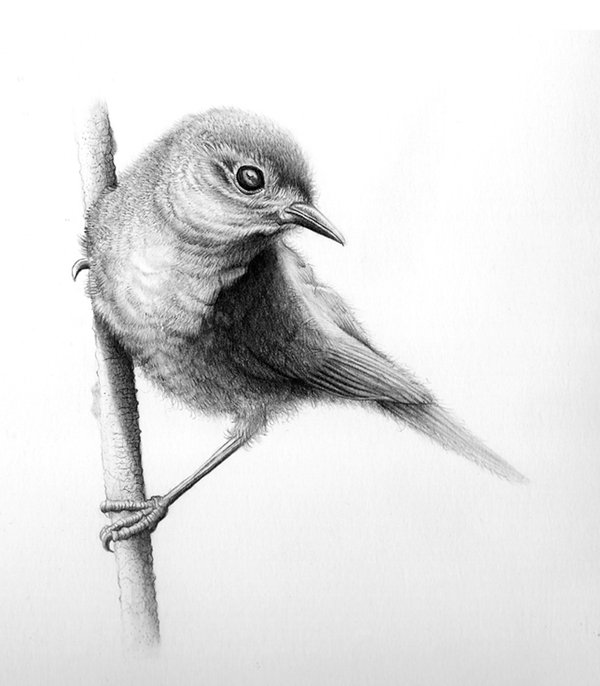 Birds drawings sketches