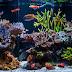 Saltwater Aquarium Tank Set-up Guide