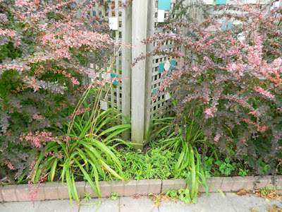 Toronto Leslieville Garden Cleanup Before by Paul Jung Gardening Services--a Toronto Gardening Company