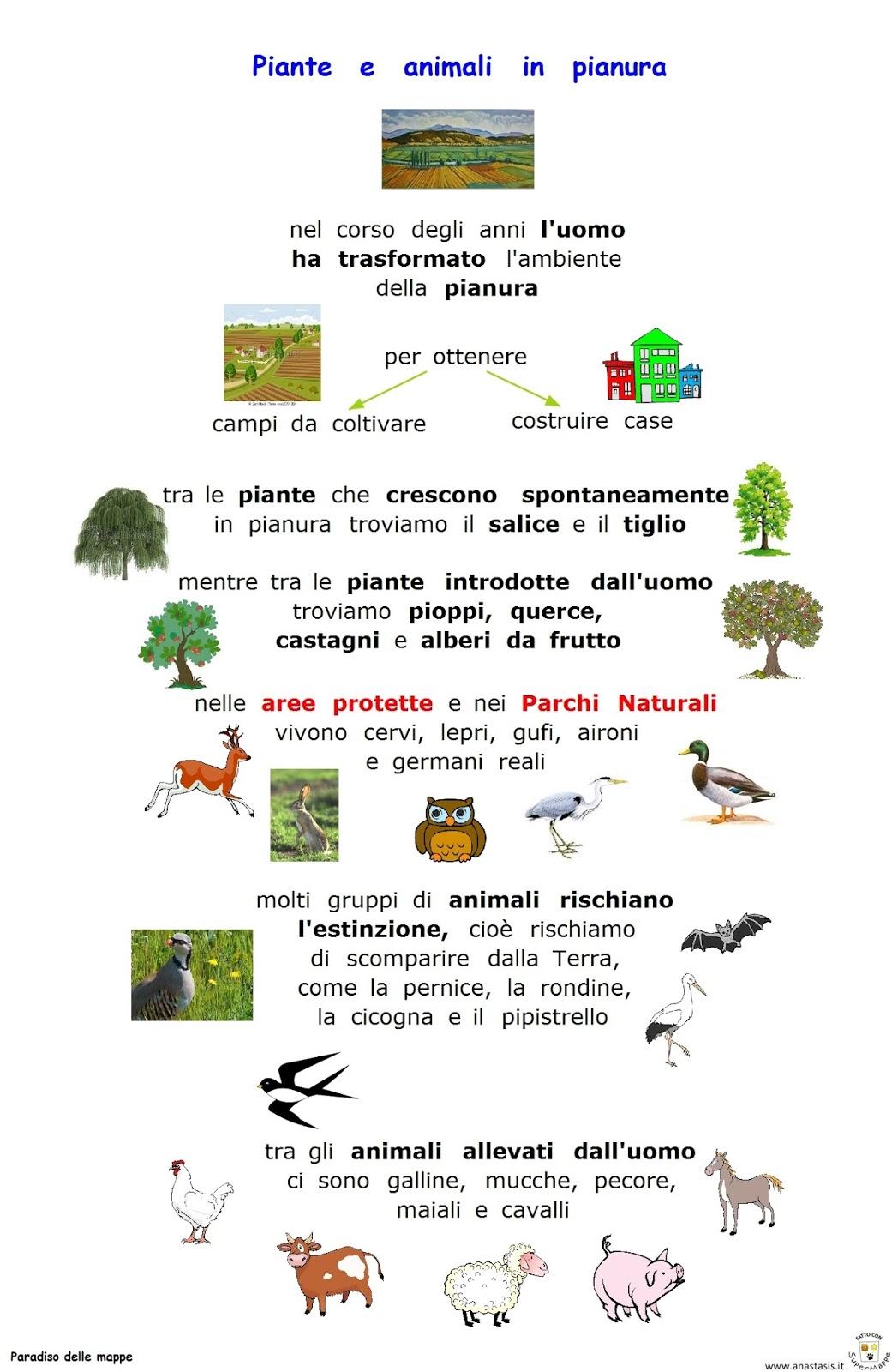 Immagini Di Piante E Alberi paradiso delle mappe: piante e animali in pianura