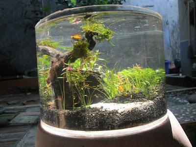akuarium kecil