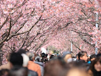 6 Alasan Menarik Negeri Sakura Jadi Primadona Wisata