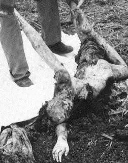 Adolfo de Jesús Constanzo | Photos | Murderpedia, the ... |Matamoros Mexico Murders