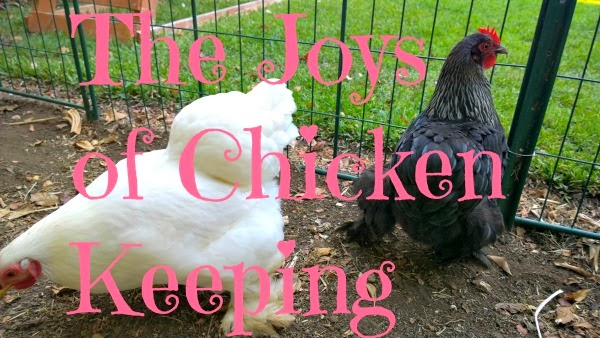 benefits of raising backyard chickens, bantam chickens