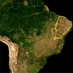 #Caatinga, Bioma Exclusivamente Brasileiro