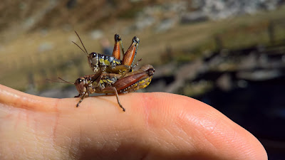 Only us and the grasshoppers making love at Rifugio Garelli.
