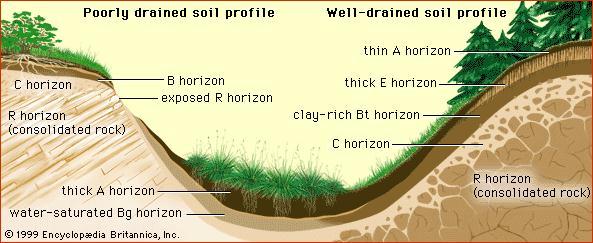 Faktor Pembentukkan dan Perkembangan Tanah