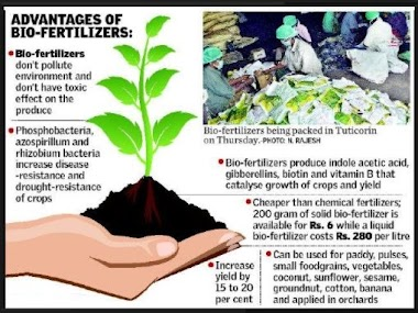 Different Types of Bio Fertilisers