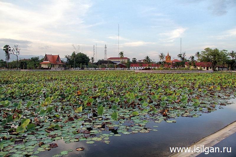Prud-lotosov-Gorod-Kampot-Kambodzha-Cambodia