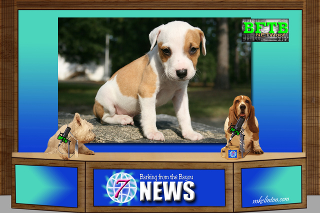 BFTB NETWoof News about a paralyzed pup being rescued