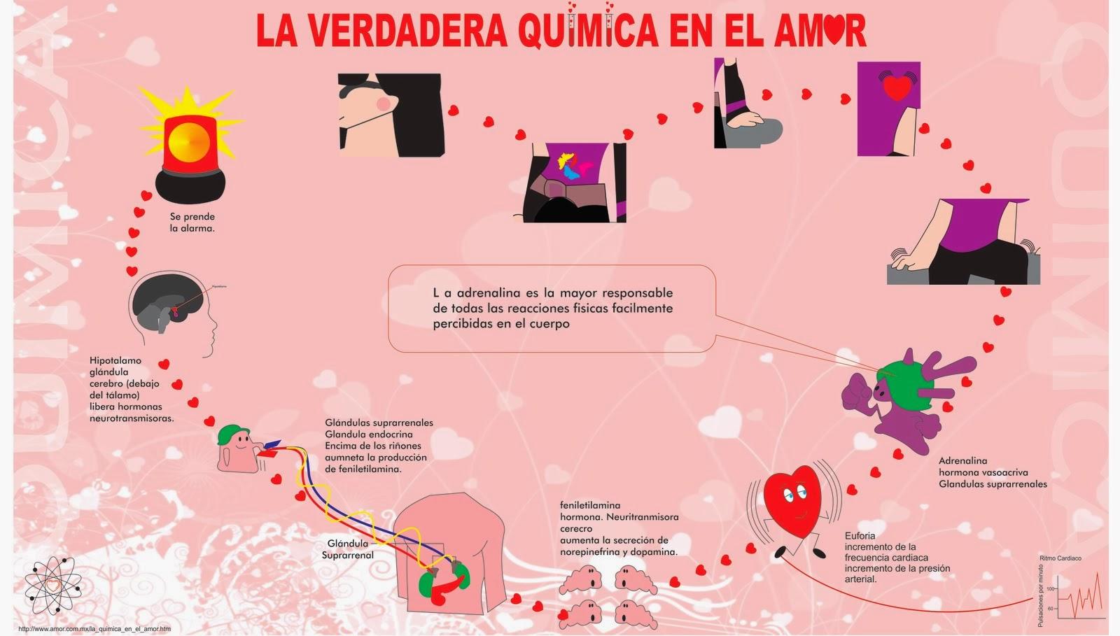 Qu Es El Amor Respuestas Desde La Biolog A # Muebles Hutam Ltda