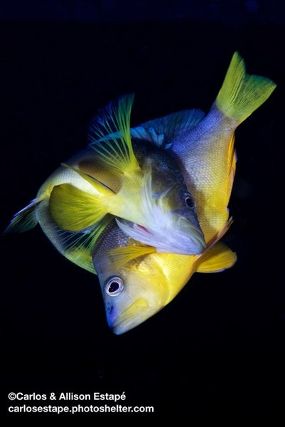 How new species arise in the sea