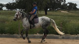 Portugal, Riitta reissaa, Horsexplore, working equitation, Pero Viegas