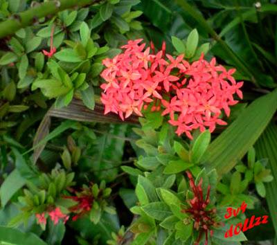 Kompak serempak. Foto Bunga. Natural itu Cantik.