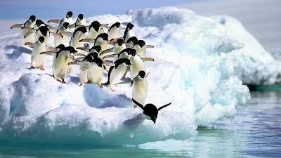 Things you Should know about Antarctica