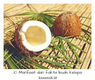 isi buah kelapa