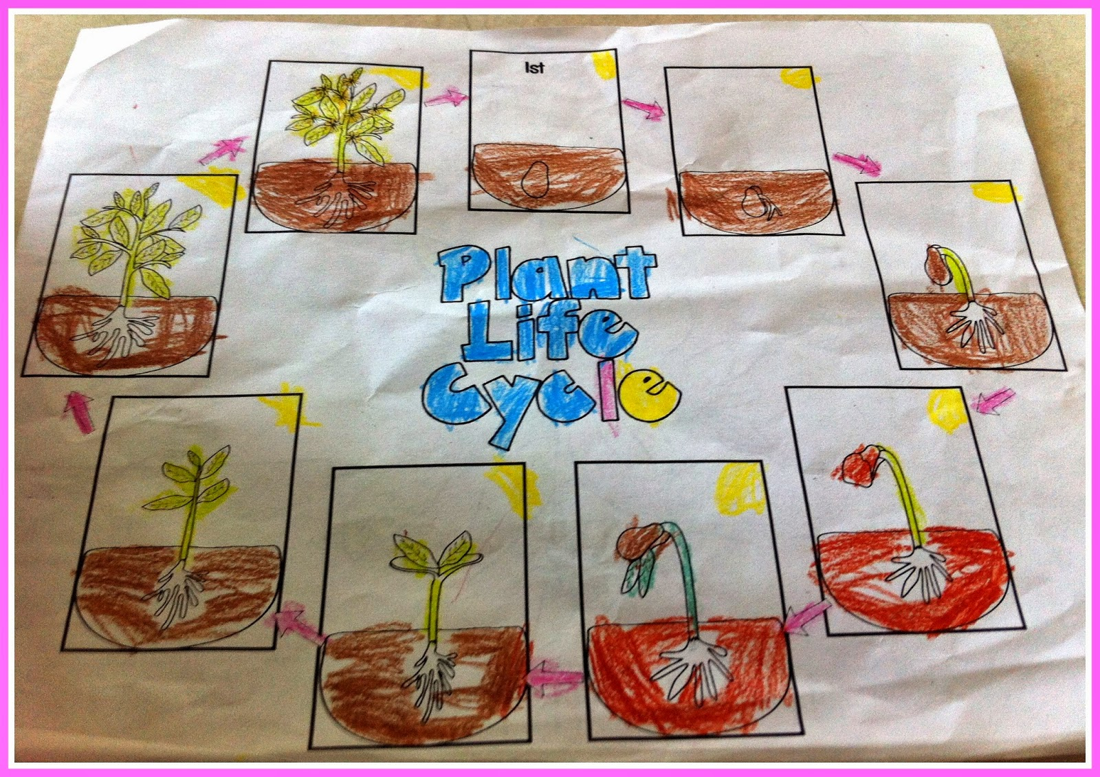 Herding Kats In Kindergarten Plant Life Cycle Unit