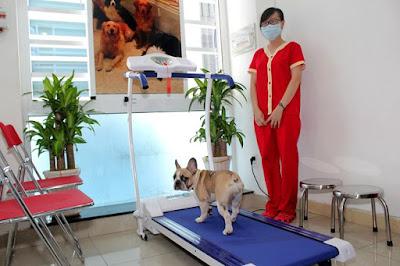 Chăm sóc thú cưng là nhu cầu của nhiều người chủ bận rộn