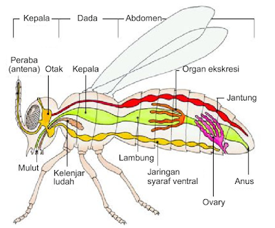 Kingdom Animalia : Filum Arthropoda dan Echinodermata