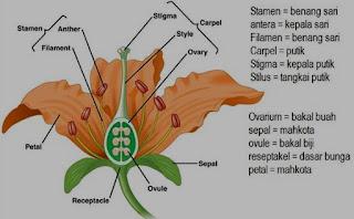 Soal Biologi : Fungsi Jaringan Tumbuhan dan Pembahasan