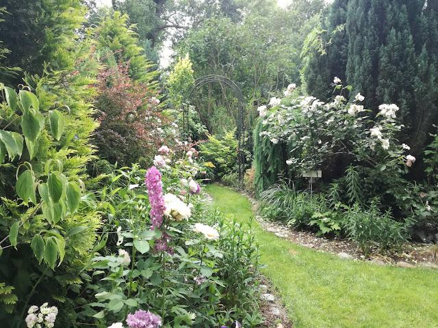 działka ROD, trawiasta ścieżka w ogrodzie