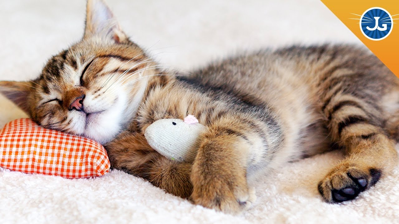 Cats Saying Goodnight Gif