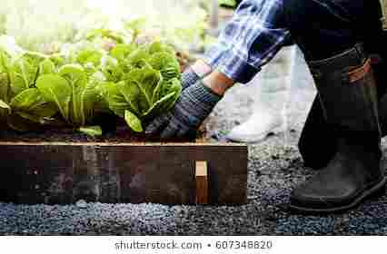 Essay on the Importance of agriculture in India