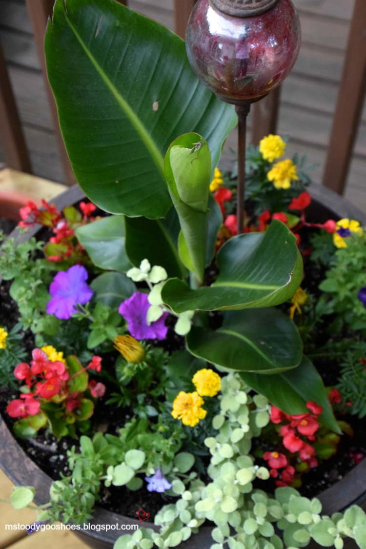 10 CONTAINER GARDEN IDEAS | Ms. Toody Goo Shoes