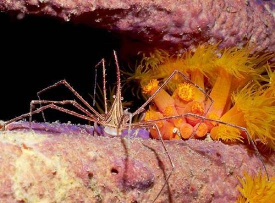 arañas gigantes Antártida