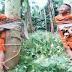 Mencuri Ikan karena kelaparan, Anak yatim Dipukul dan Diikat Di Pohon