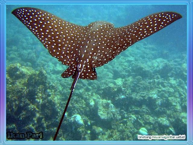 NamaNama Ikan Laut