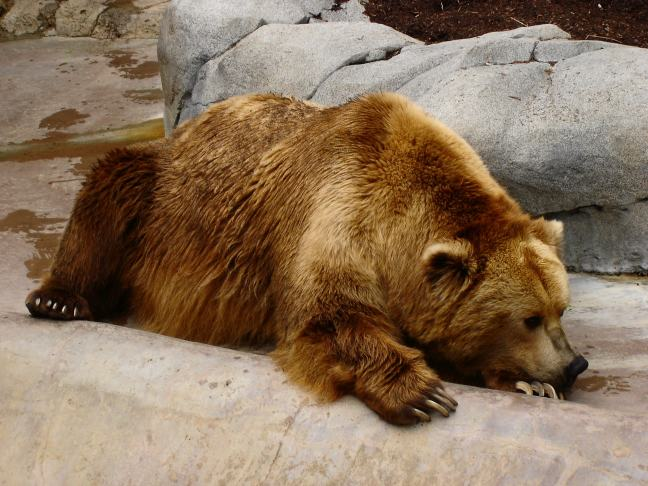 Extremely Sad Amp Depressed Animals Funny And Cute Animals