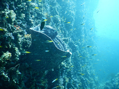 Photo of scuba diving Phi Phi Islands, using a Nikon Coolpix AW130 camera