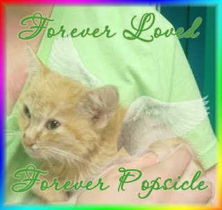 "A Rainbow Bridge badge for Popsicle. It says, ""Forever Loved. Popsicle Forever."""
