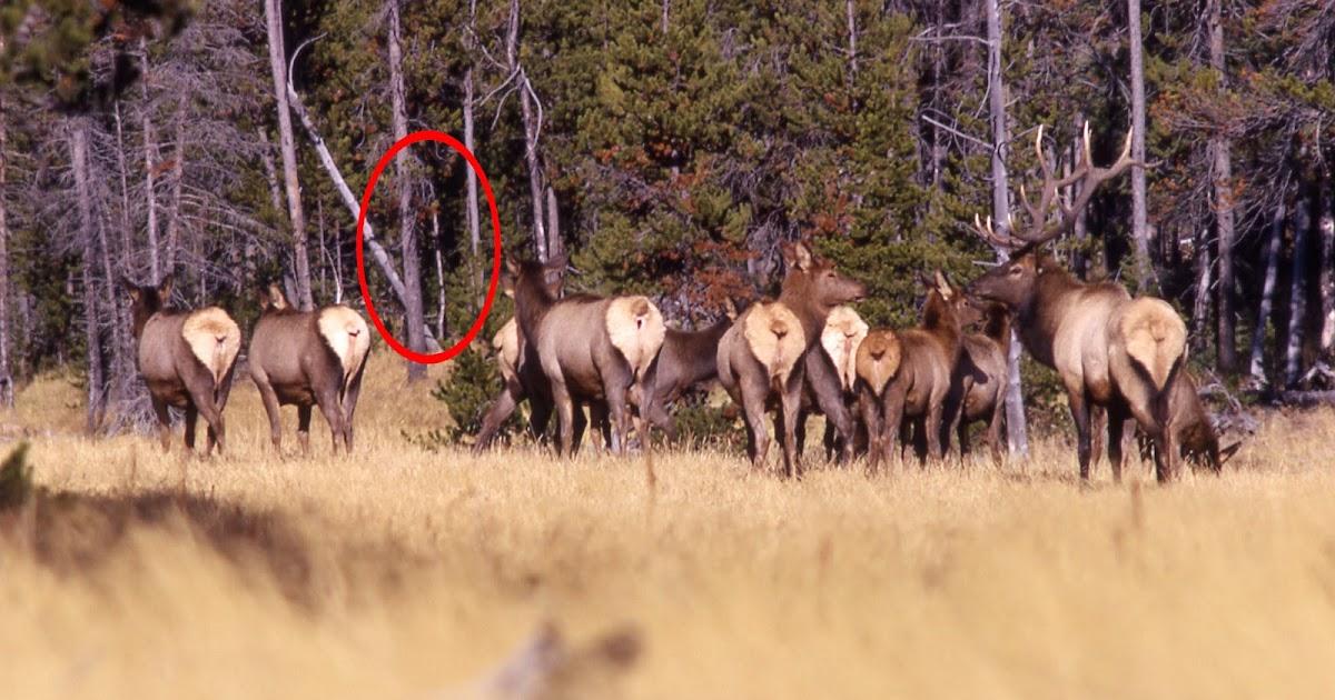 elk fucking
