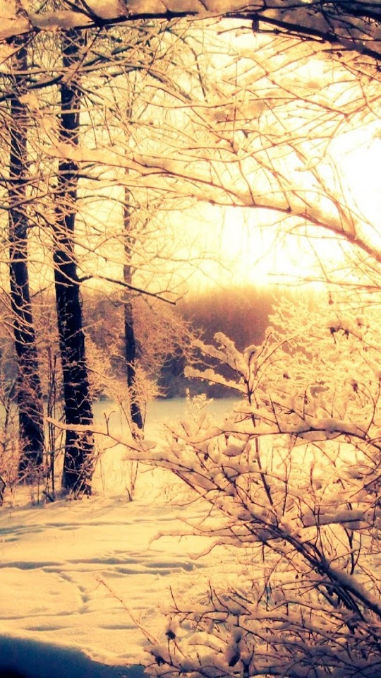 Winter Woods Sunset   Galaxy Note HD Wallpaper