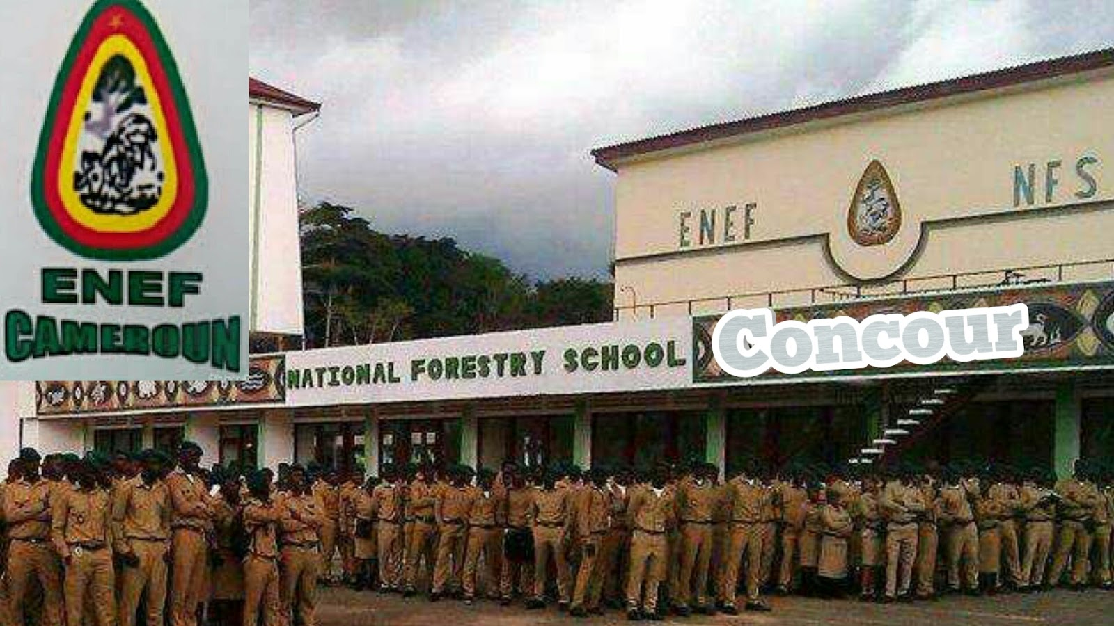 National Forestry School Mbalmayo concours
