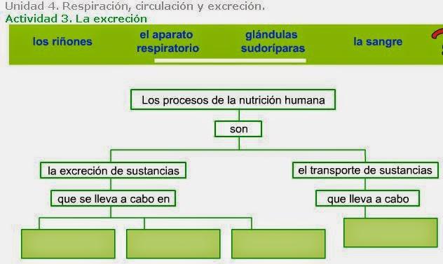 http://www.ceiploreto.es/sugerencias/A_1/Recursosdidacticos/QUINTO/datos/02_Cmedio/datos/05rdi/ud04/03.htm
