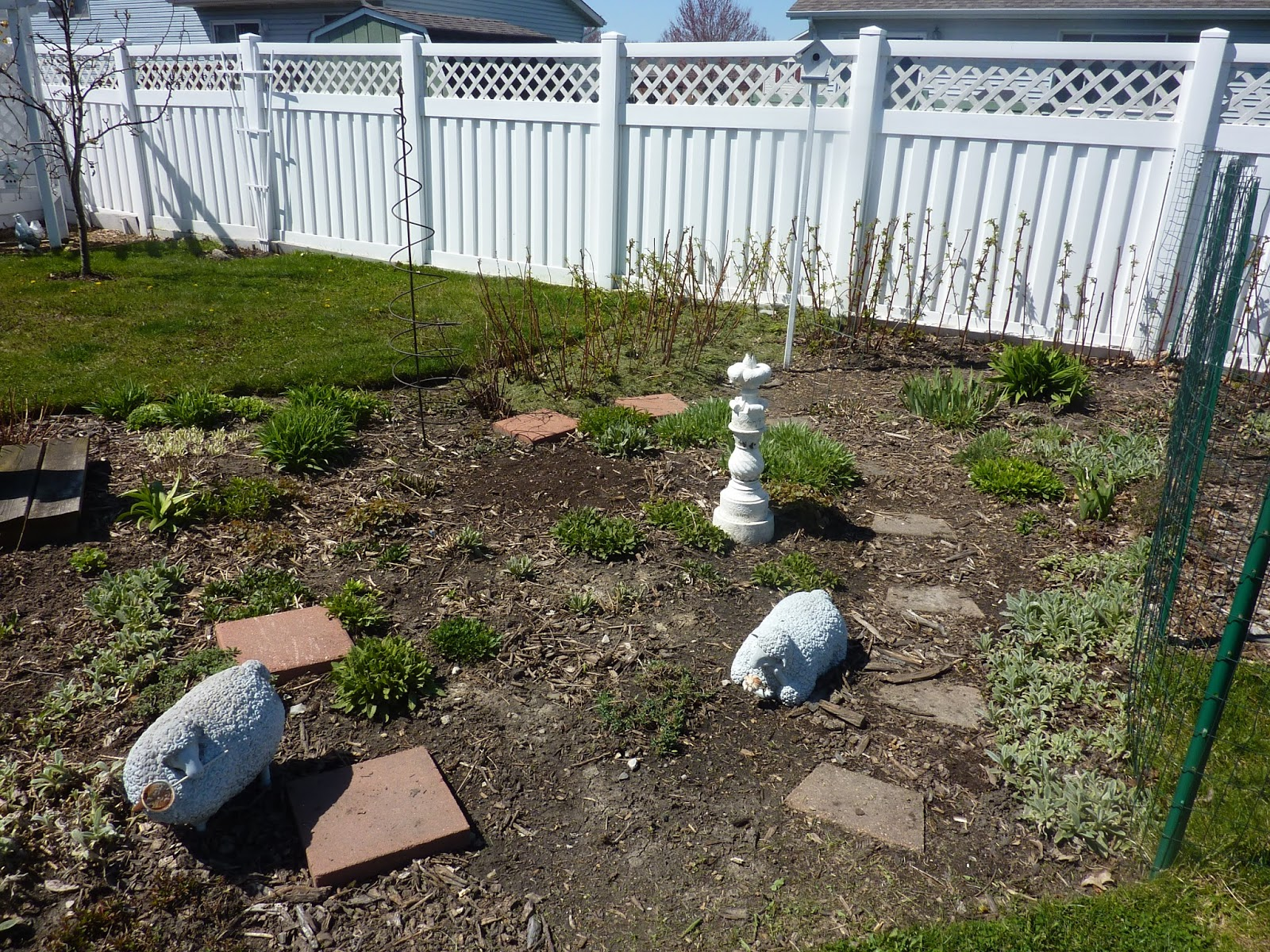 Cozy Thyme Cottage: Growing at Last!!