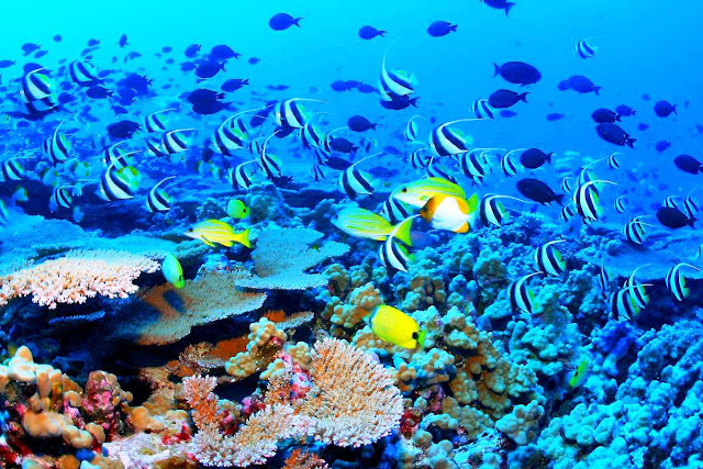 Parque Nacional Arrecifes Cozumel