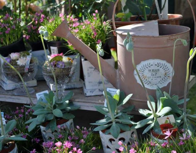 Gestecke und Pflanzenarangements von Tausendschön Seligenstadt