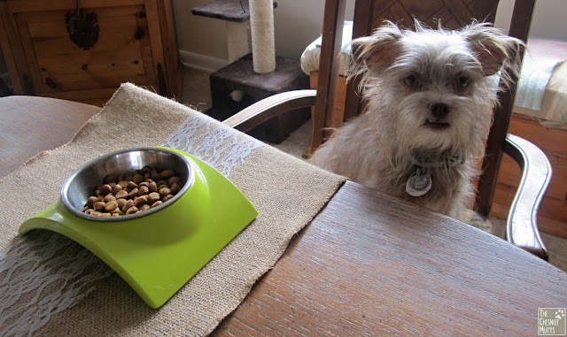 Bailey next to a bowl of Pinnacle Duck and Sweet Potato Grain Free Holistic Dog Food