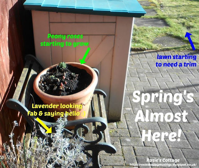 Spring is almost here - Signs that spring has (almost) arrived in the garden.