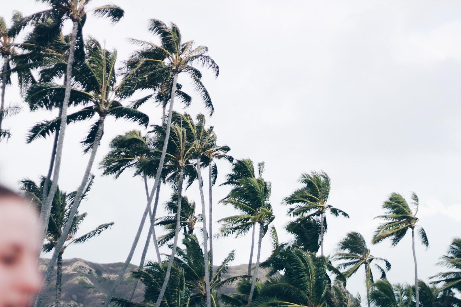 windy palm trees o'ahu hawaii