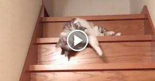 This Cat Going Down the Stairs Is Laziest Cat Ever