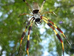interesting facts about spider