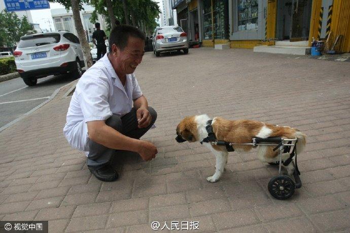 Misericordia perrito sin hogar atropellado y a punto de for Veterinario di punto di cabina