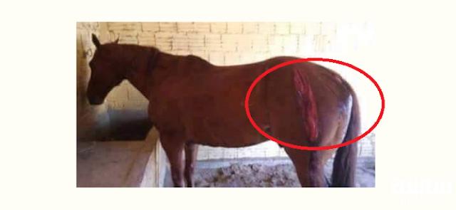 لن تصدق ماذا فعل بعد ان خسر حصانه السباق !!حدث في بلد عربي .. ستذهلون مما فعل بحصانه!