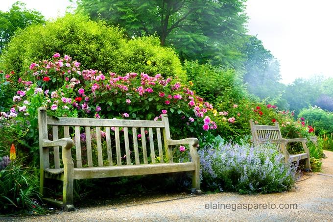 flores lindas de primavera